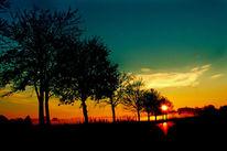Zweig, Blau, Sonnenaufgang, Horizont
