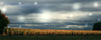 Feld, Wolken, Zweig, Mais