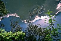 Zweig, Himmel, Teich, Blätter