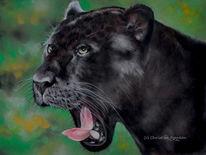 Tierportrait, Raubtier, Wildtier, Tierwelt