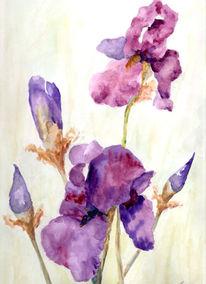 Schwertlilie, Blumen, Blütenzweig, Iris