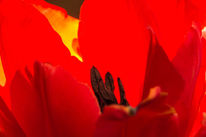 Blütenstempel, Pflanzen, Frühling, Kunstlicht