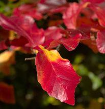 Blumen, Park, Herbstblätter, Makro