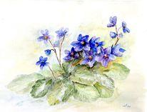 Mijello, Usambaraveilchen, Blau, Zimmerpflanze