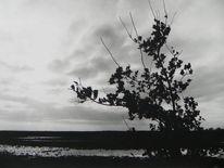 Westermoor, Regen, Wasser, Eichen