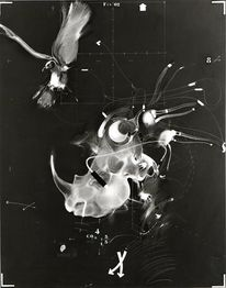 Rhinocéros, Vogel, Kable, Malerei