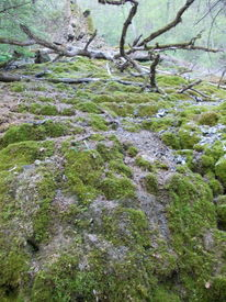 Landschaft, Susannegottschalk, Frühjahr, Werden und vergehen