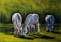 Weide, Tiere, Abendlicht, Tierportrait