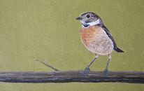 Vogel, Braunkehlchen, Malerei