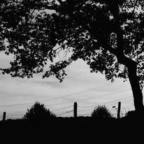 Baum, Landschaft, Licht, Schwarz
