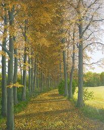 Landschaft, Wald, Herbst, Weg