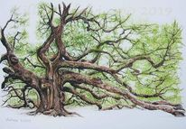 Natur, Eichen, Zeichnung, Naturstudie