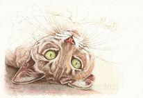 Katze, Tuschezeichnung, Grüne augen, Tierportrait