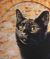 Mauer, Katzenportrait, Schwarz, Steinmauer