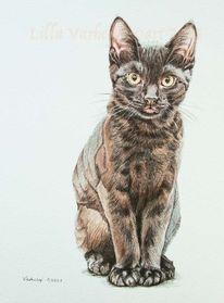 Tuschmalerei, Katze, Braun, Schwarze katze