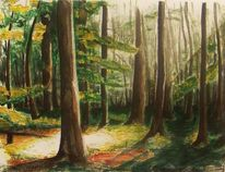 Schatten, Nischtechnik, Wald, Licht