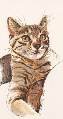 Tiere, Federzeichnug, Katze, Augen