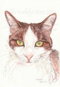 Tierportrait, Katze, Skizze, Tiere