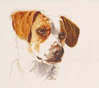 Tierportrait, Schautze, Hund, Tuschmalerei