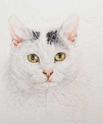Auftragszeichnung, Katze, Tierportrait tusche, Tierzeichnung