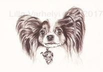 Illustration, Papillonhund, Zeichnung, Auftragsarbeit