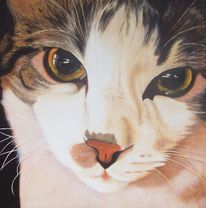 Tierportrait, Glanz, Fell, Katze