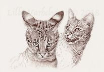 Savannahcat, Monochrom, Illustration, Katze