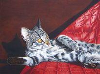 Liegend, Katzenpfoten, Tierportrait, Augen