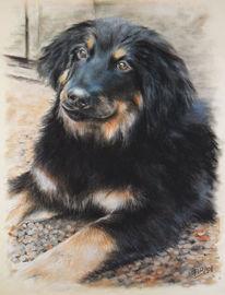 Tierportrait, Pastellmalerei, Realismus, Hund