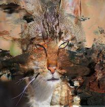 Katze, Reservieren, Ägypten, Freigang