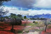 Baum, Spanien, Gitter, Wiese