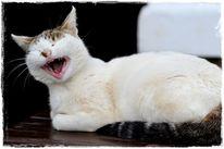 Katze, Gähnen, Samtpfote, Fotografie