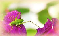 Garten, Weiß, Fotografie, Clematis