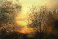 Winter, Sonne, Baum, Sonnenuntergang