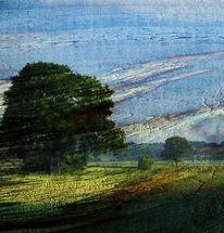 Baum, Wind, Sturm, Landschaft