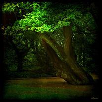 Landschaft, Baum, Stimmung, Durchbrechen