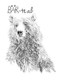 Bär, Bärte, Bart, Zeichnung