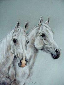 Araber, Pferdeportrait, Zeichnungen