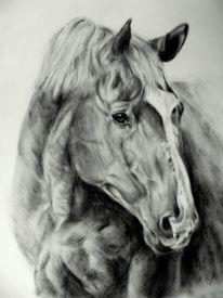 Pferdeportrait, Pferdezeichnung, Bleistiftzeichnung, Zeichnungen