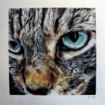 Katze, Katzenportrait, Malerei
