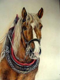 Kaltblüter, Pferdeportrait, Malerei