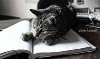 Katze, Spielen, Zeichnung, Tiere