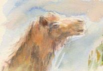 Kamel, Tiere, Aquarellmalerei, Aquarell