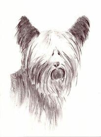Terrier, Zeichnungen,