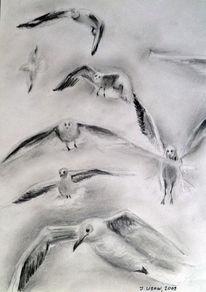 Zeichnung, Stillleben, Tiere, Möwe