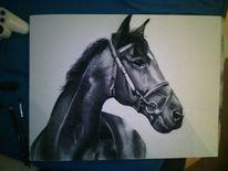 Kohlezeichnung, Zeichnung, Schwarz weiß, Pferde