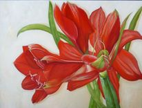 Amaryllis, Weiß, Pflanzen, Rot