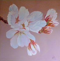 Baum, Weiß, Blüte, Kirschblüte