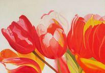 Rot, Gelb, Tulpen, Weiß
