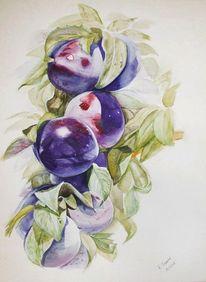 Blau, Obst, Aquarellmalerei, Pflaume